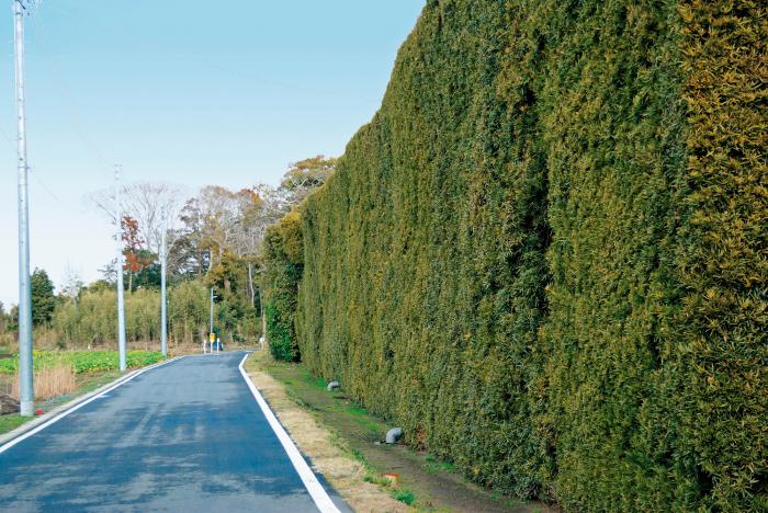 匝瑳市の植木