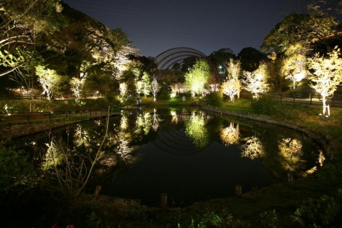 ITOZU YORU ZOO ~夜の動物園~